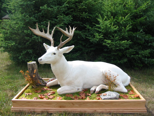 White Buck on Custom Base Shot at Wild Rivers Whitetails